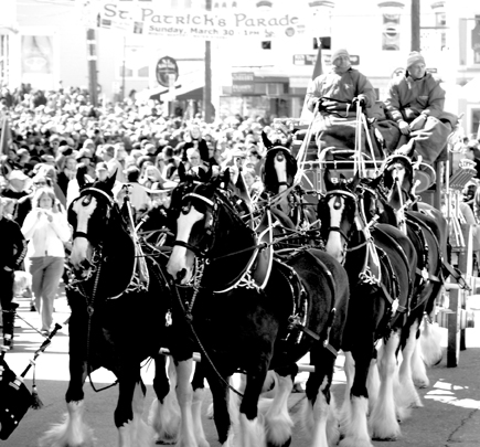 budweiser clydesdales The Orioles & Horseshit in Downtown Baltimore Tonight